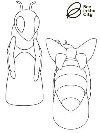 bee template-2